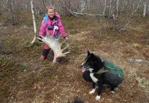 20. Karen med det flotte elggevir vi fandt. Far og datter i Vildmarken, Nordsverige