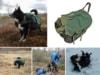 anmeldelse-rygsaek-til-hund-kloev