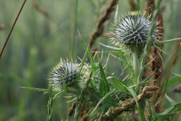 Billede af flot plante. Fra Bikepacking, Danmark rundt