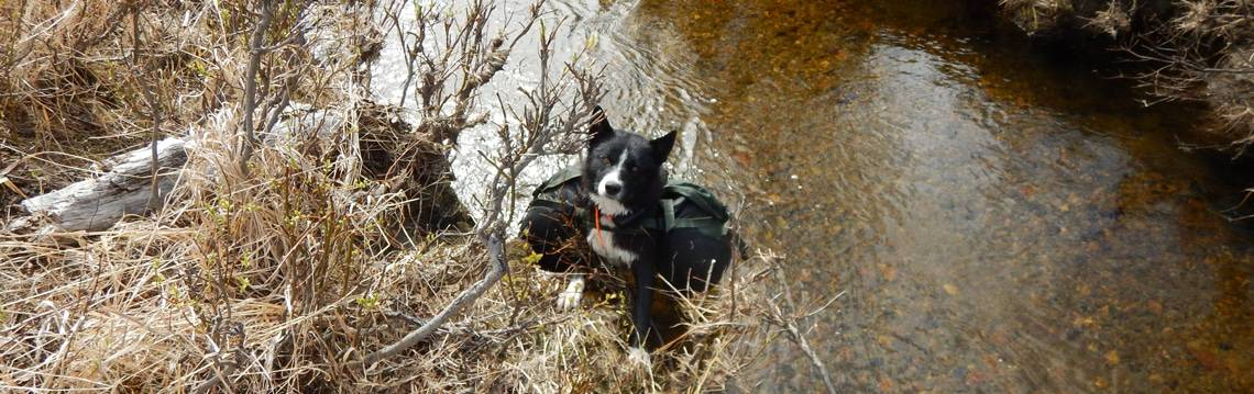 gode-raad-til-hund-med-hunderygsaek-kloev