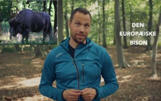 Erik B. Jørgensen står i skoven og fortæller [Historiefortælling] Mødet med en bisonflok på Bornholm