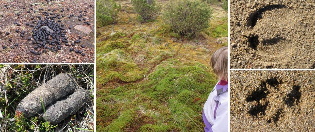 Billeder af spor og lort i naturen, hvor Erik B. Jørgensen leger Gæt en lort med sin datter Karen