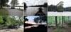 Let kanotur sydlige Sverige Halen og Immeln