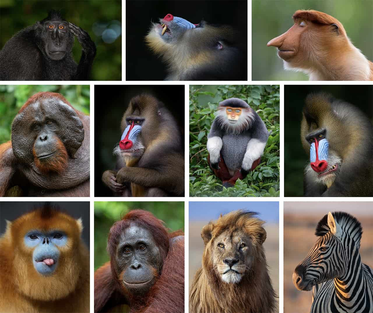 Dyreportrætter af Mogens Trolle