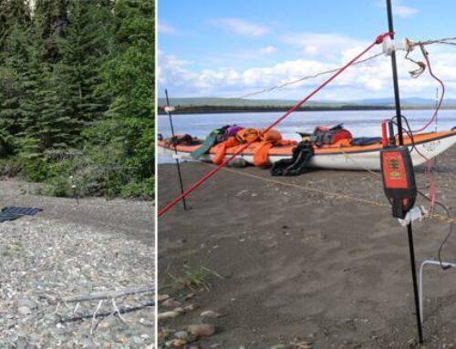 Sikkerhed i lejren, stødhegn, Electro Bear Guard LWC, anmeldelse