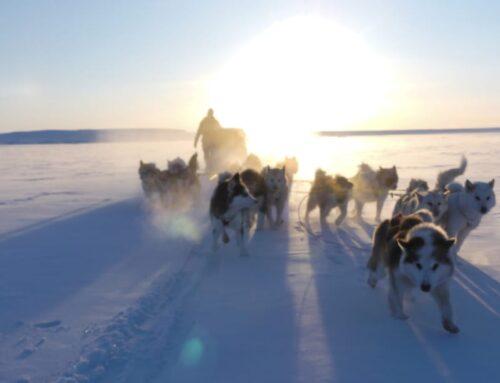 Vores hunde på 2. Thule til Thule ekspedition